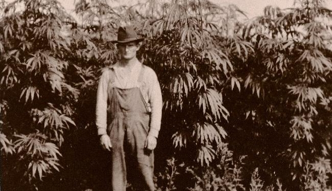 history-of-cannabis-hemp1